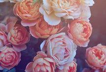 Flowerspiration.