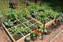 Garden and growing / by Sandra Martel McKinney Dent
