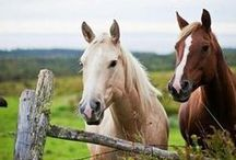 Horses... / all kinds of horses; many colors, big & small...beauty in motion / by Vintage Butterfly {>i<}