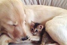 Animal ➤ Canine/Feline / by Jenny Skinner