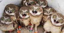 WhoHoot R You?***! / All about owls....