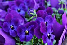 Purple Posies / by Diane Freyer