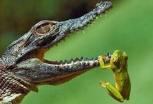 Amphibians & Reptiles / Often abhorred but really cute! They have their place in our world. / by Jenny Skinner