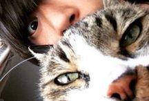 [Alexandros]看板猫ミルク