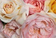 roses together
