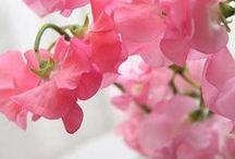 flowers galore / by Julia Grundling