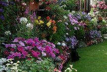 ~Gardens & flowers~ / by Karla M