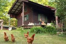 Homesteading / Homesteading - Country Living - Self Sufficiency - Pioneer Skills / by Simple Life Blessings