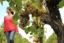 Vins / wine Val de Loire / 32 appellations, 20 000 hectares... Anjou terre de vins, le plus grand vignoble du Val de Loire !