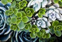 Gardening / by Emily Mashburn