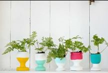 Springtime Decor for your Home / Now that spring has sprung, it's time to brighten up your home with these cute DIY crafts. / by Sabal Homes