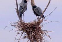 *     ✈      〰    ⚛    ❇    ➿     〰  ПЕРНАТые - Birds