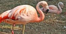 Flamingos / Flamingos als Torte, Bild, Partyidee