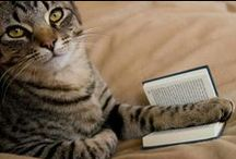 Virtual Library Cat / Because every library needs a cat! / by MHS Library