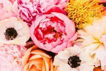 Flowers / - F L O R -