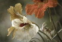 Flowers, Flowers, Flowers, Too / Beautiful Flowers