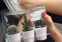 Kaktusy / Kaktusy❤️