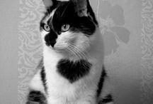 Heart cats / Katjes met hartjes