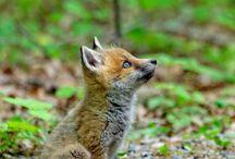 Too cute! 2