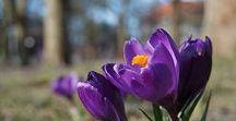 Spring & Szczecin
