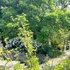 Gartengestaltung / Vom Traum zum Garten – mit Gartenplanung, Gartenbau und Pflanzen von kupkagarten.