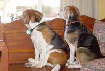 Love me a beagle / by Mary Gordon Hanna