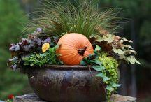 Fall / by Paula Nicholson