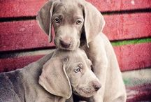 Puppies!!! (Aka, Danes) / by Kirsten Potter