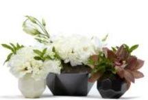 - floral & garden -