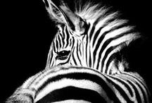 Black & White / by Allison Gullins