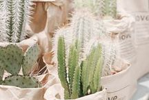 Plants. / plant care, shade plants, gardening advice, indoor plants, creative planters, unconventional planters, cactus
