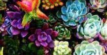 Flores y paisajes / Hermosas flores y pasajes inspiradores