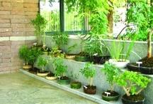 Indoor Gardens / by Jenn Barnes