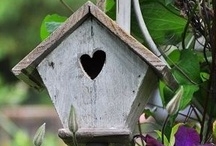 Birdhouses / by Jenn Barnes