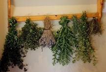 Herbs / by Jenn Barnes