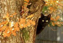 Autumn~My Favorite Season!!! / by Lori Stilkey