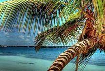 Florida & Karibik