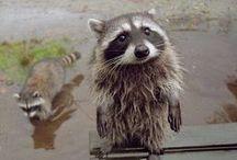 Cute! / Cutest little fur-balls!