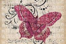 Papillons / Papillons d'ici et d'ailleurs