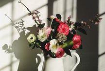 Flowers / bouquets/ centerpieces/ floral arrangements / by Amy McDavid