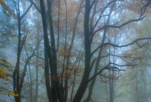 Autunm / I've have never understood people who do not love autumn...