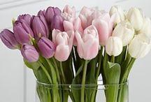 - Blooms -