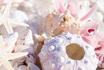 Sea shells / Sea shells