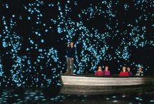 Glow worms cave / Glow worms cave new zealand