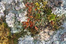 Stones and lichen
