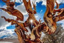 Bäume - Wurzeln