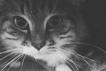 Suivez @wonderwildqueen sur Instagram :) / Retrouvez toutes les photos postées sur mon compte Instagram dans ce tableau !   N'hésitez pas à me suivre directement sur mon blog https://wonderwildqueen.fr ! J'y offre un guide GRATUIT pour vous apprendre à gagner de l'argent avec votre passion :)