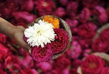 • My India / by Marija Kurmurmiau