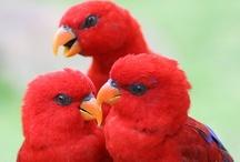Birds / by Marianne