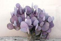 #cactus | Cactus / #cactus #gardening #succulent #plant